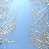 2008.shiga-5.jpg