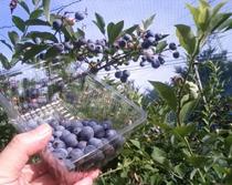 blue berry-2011.08-3.jpg