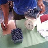 blue berry-5.jpg