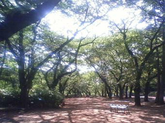 sakura_2011_1.jpg