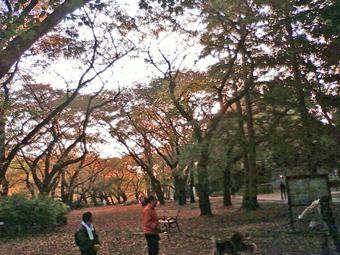 sakura_2011_2.jpg