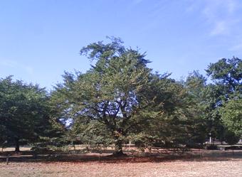 sakura_2011_4.jpg