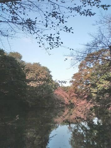 sakura_2012_5.jpg