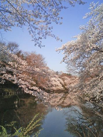 sakura_2012_6.jpg